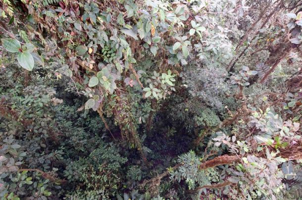 Blog-Cloud-Forest-5