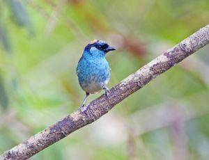 Cloud Forest bird 5