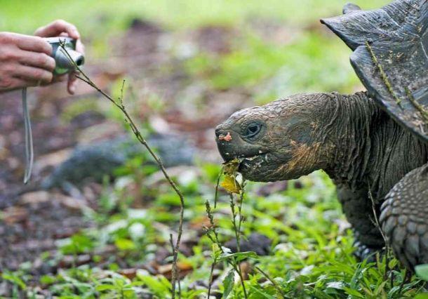 Giant Tortoise 5