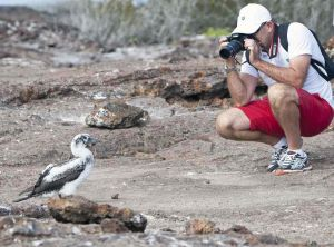Nazca Boobys 6 and photographer