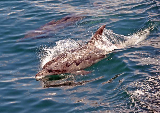 Blog-La-Croix-island-dolphins-8-Port-Elizabeth-South-Africa