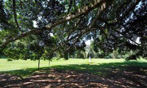 Blog--Peradeniya-Botanical-Gardens-4