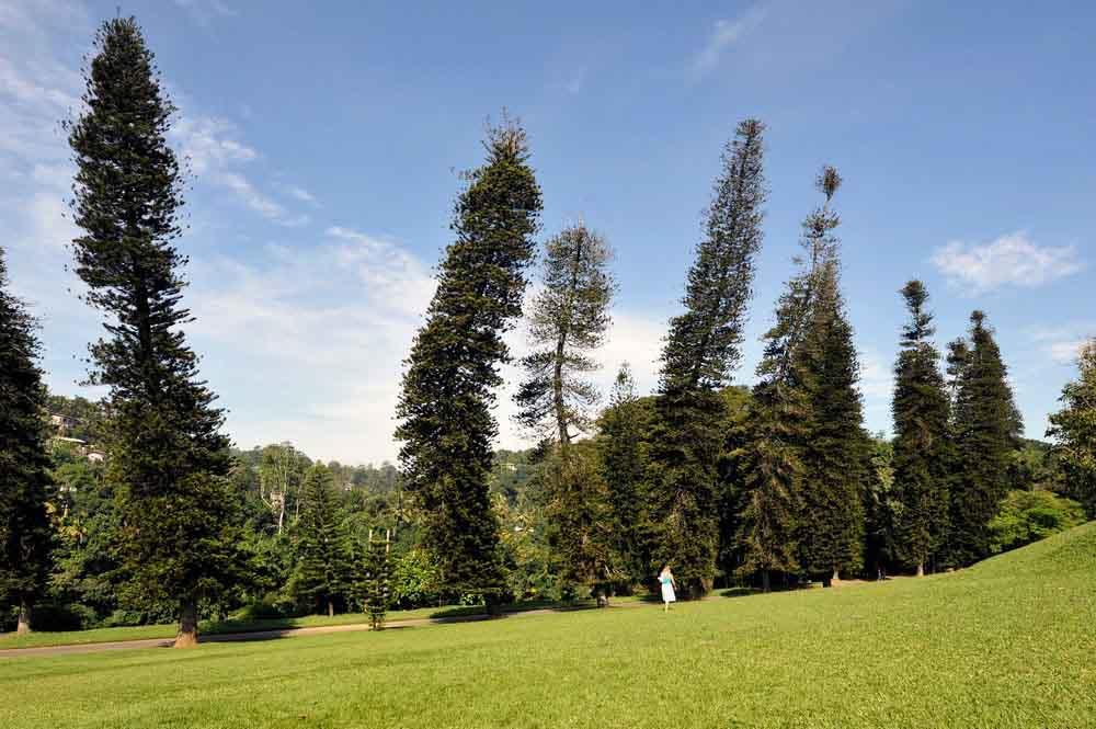 Blog--Peradeniya-Botanical-Gardens-6