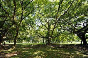 Blog--Peradeniya-Botanical-Gardens-8
