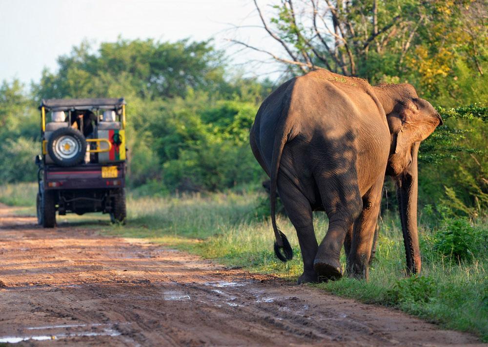 Blog-Udawalawe-elephant-2