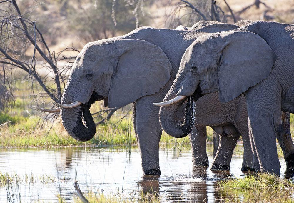 Elephant CFA_0846