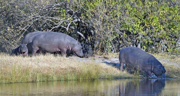 Hippo heap