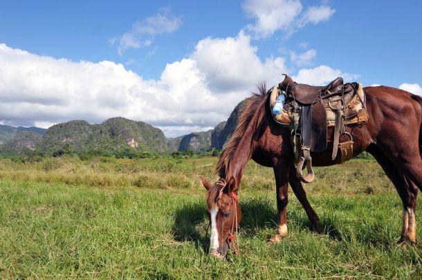 Vinales - horse riding 3 - Cuba