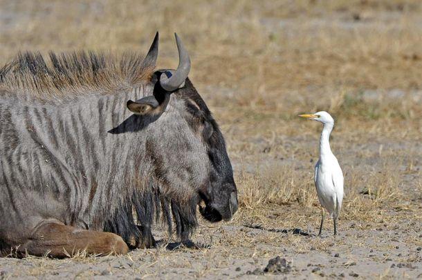 Wild-luxury-in-Botswana_003