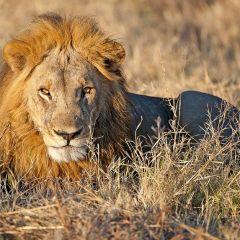 Geoff's Safari Photography Tips