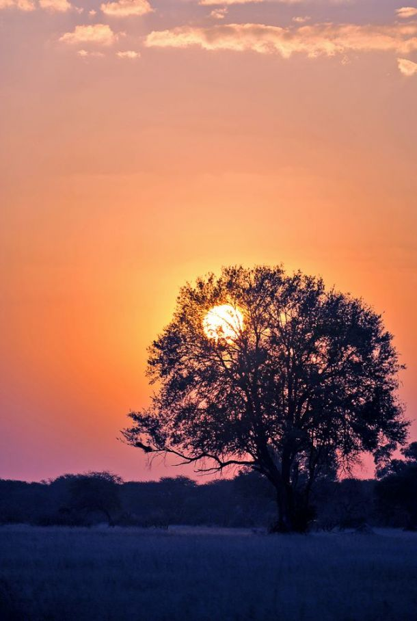 Hwange sunset 5