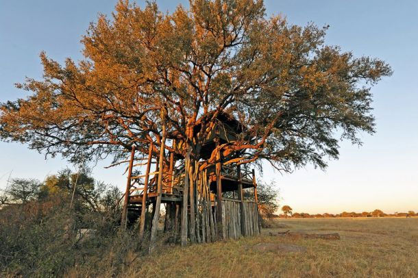 The Hide tree house 2