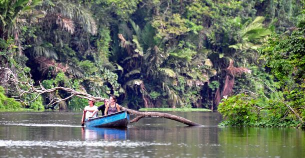 Tortuguero-river-wildlife-spotting