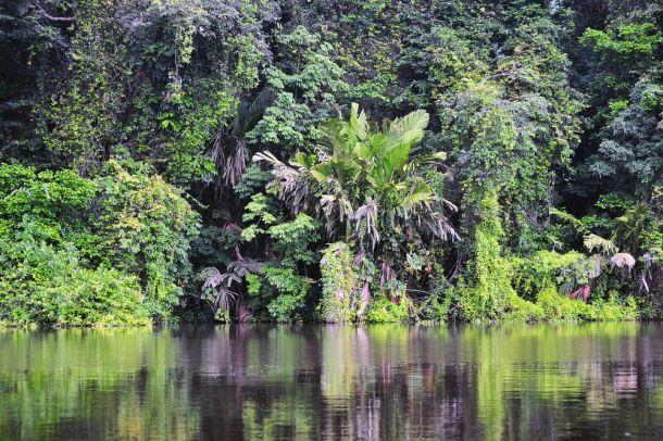 Tropical rain forest, Costa Rica