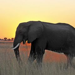 Wild luxury in Botswana