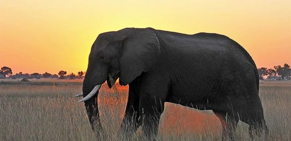 Wild luxury in Botswana