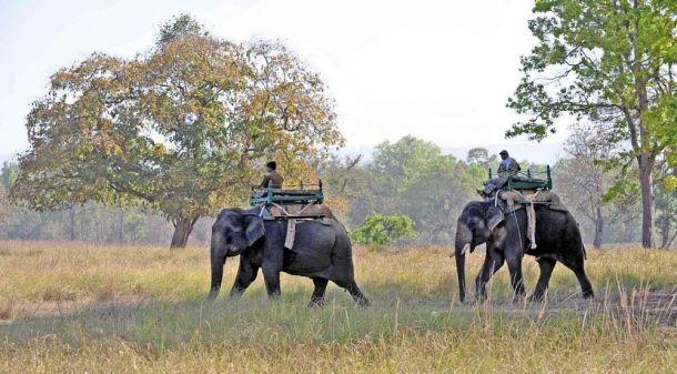 Elephants tracking,Kanha National Park