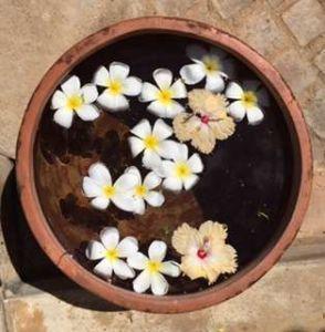 Uga frangipani display