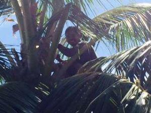 Uga palm worker