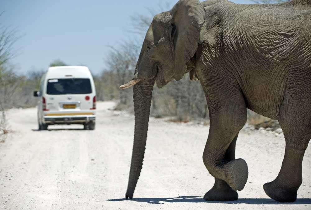 TLC Etosha Elephant 2