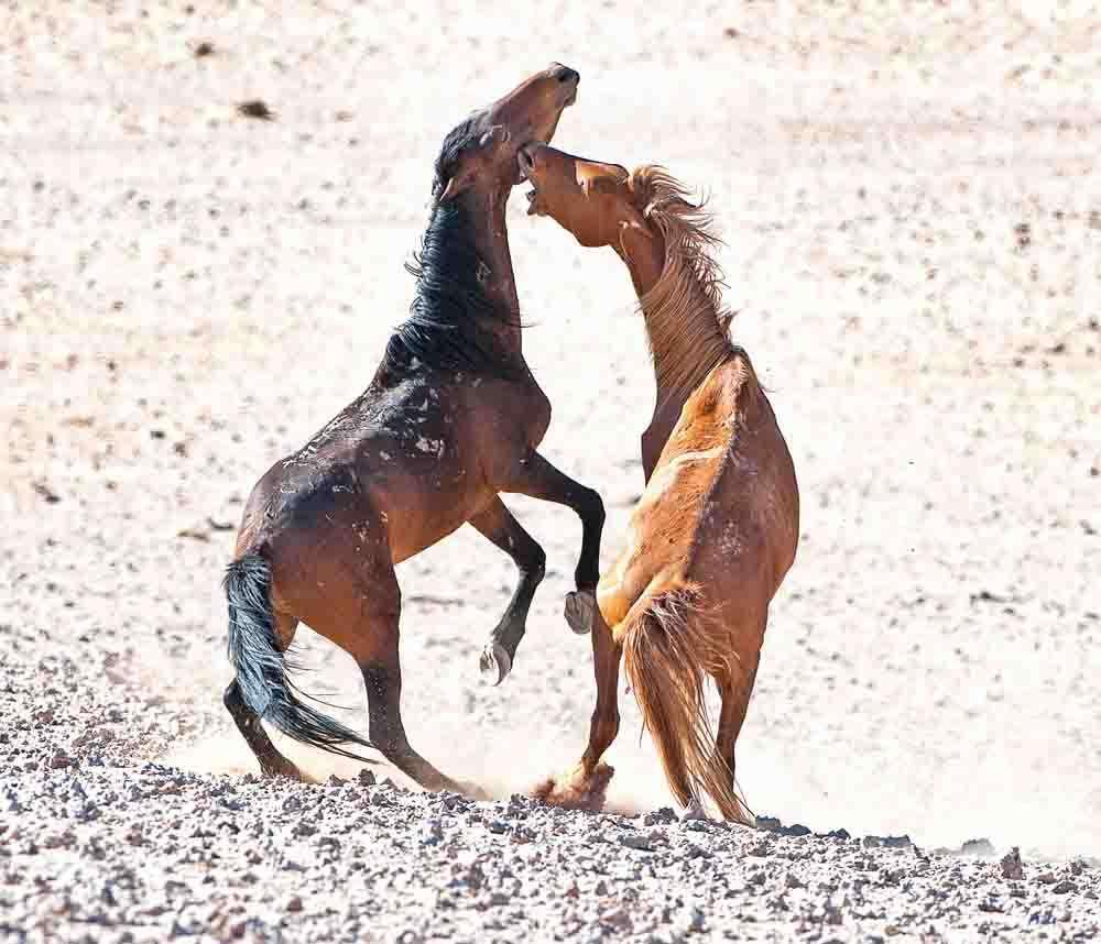 TLC Namib Desert Garab horses 21