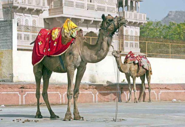 TLC Jaipur 1