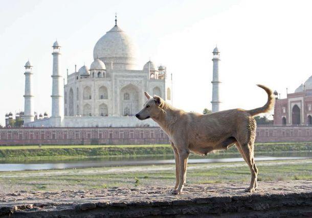 TLC Taj Mahal with dog 1
