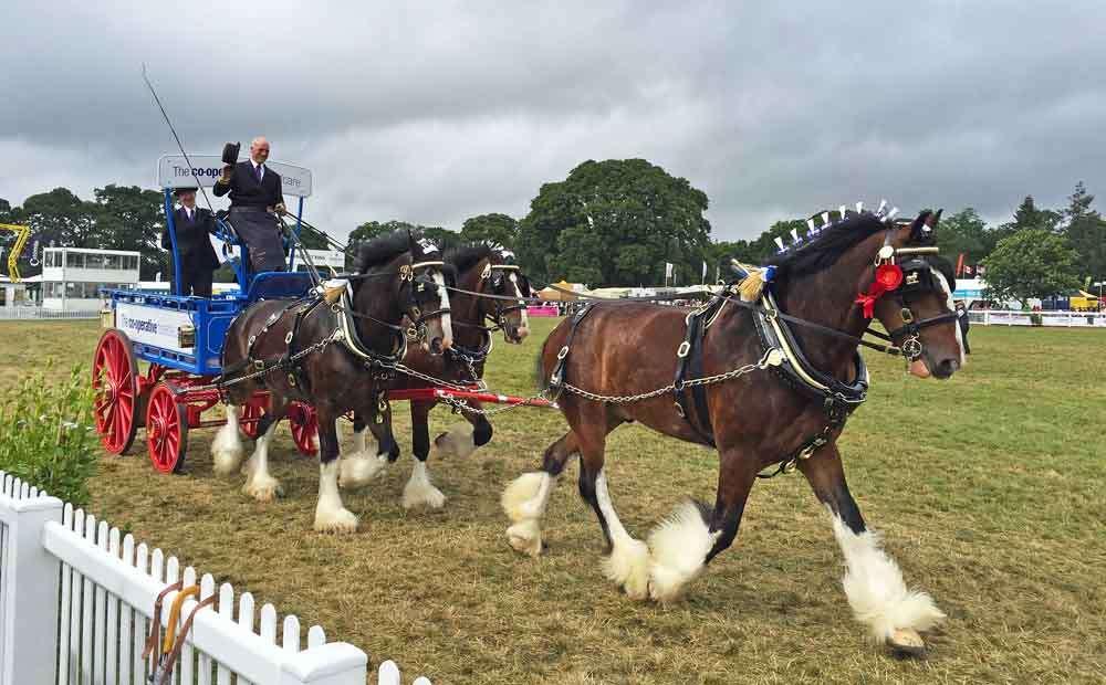 TLC - Horses 4