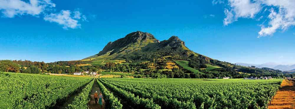 Capetown vineyards