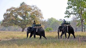 Elephants tracking,Kanha National Park, Madhya Pradesh, India 3