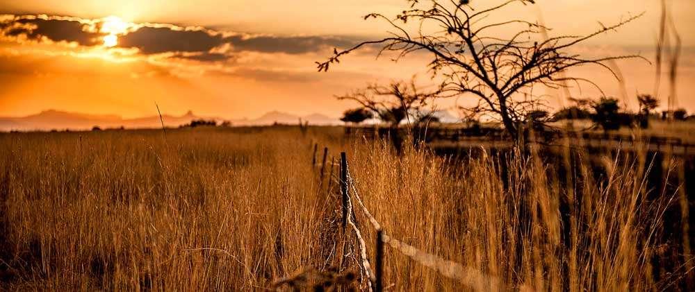 Joburg grasslands