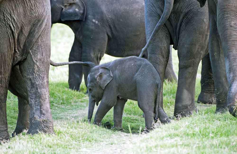 TLC Elephant baby