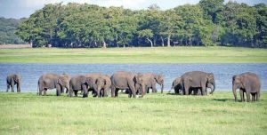 TLC Elephant gathering 3