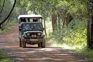 TLC Minneriya safari jeep 2