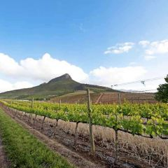 Cape Town and around – five must-see sights a little further afield