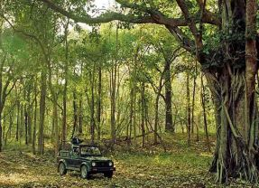 Satpura's wonderful wilderness