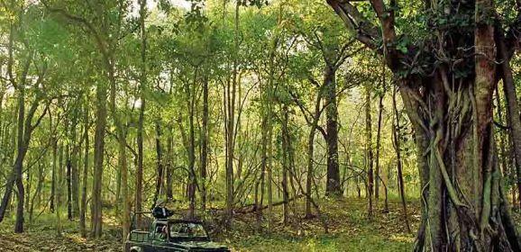Satpura's wonderful wilderness