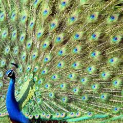 Colour on the wing in Sri Lanka