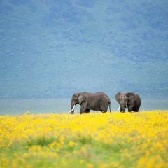 Ngorongoro Crater Part 1 – A world of wildlife