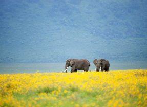 Ngorongoro Crater Part 1 – A world of wildlife