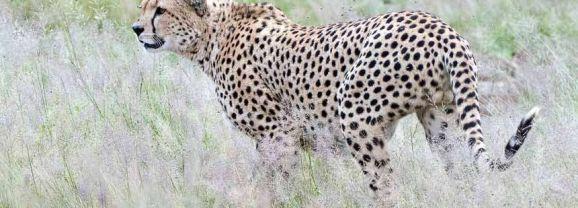 Amboseli – wonderful wildlife water world