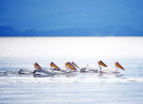 Lake Naivasha's expanding ripples of life