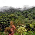 TLC Rain Forest, Manuel Antonio