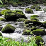 TLC Rapids