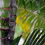 TLC Tropical rain storm, Manuel Antonio