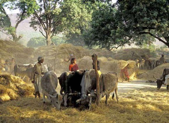 Tribal Troubles – Marginalised in Madhya Pradesh