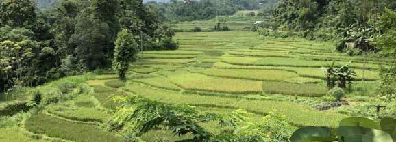 At home in the Muong hills